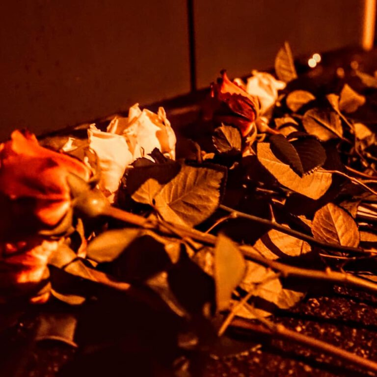 JA legt Blumen für Opfer des islamistischen Anschlags in Wien nieder